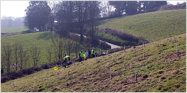 hedge-and-tree-planting
